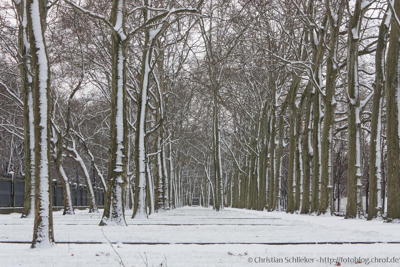 Schnee Bäume