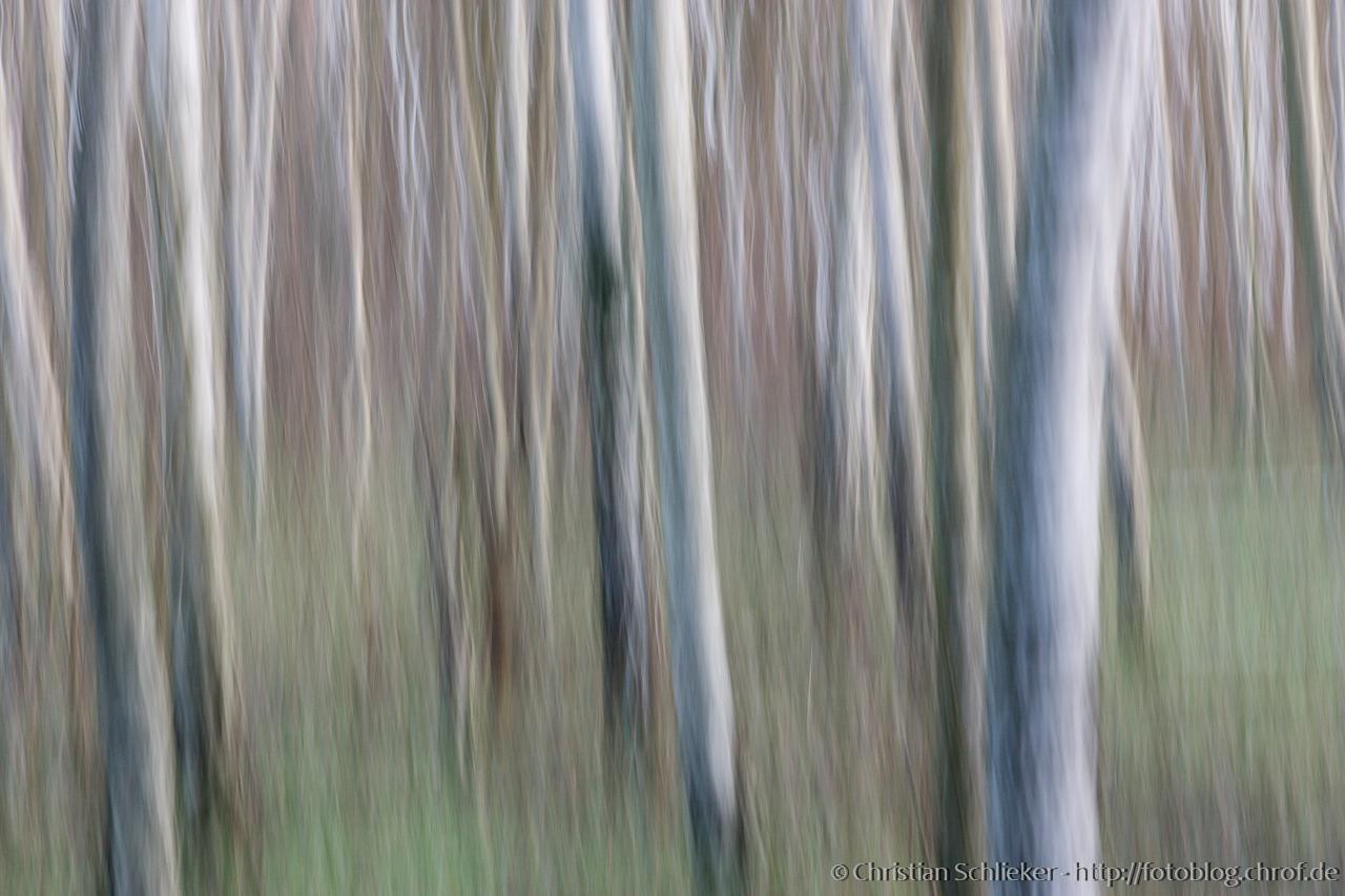Abstrake Fotographie Bäume