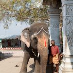 Tempelelefant