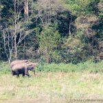 Elephanten-herde